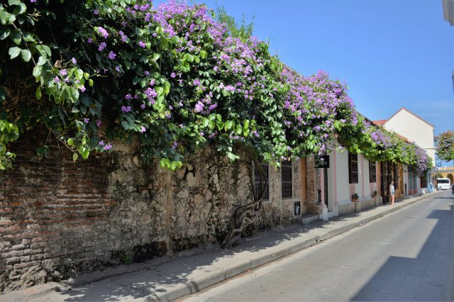 CoverMore_Lisa_Owen_Cartagena_Colourful_Flower_Street.jpg