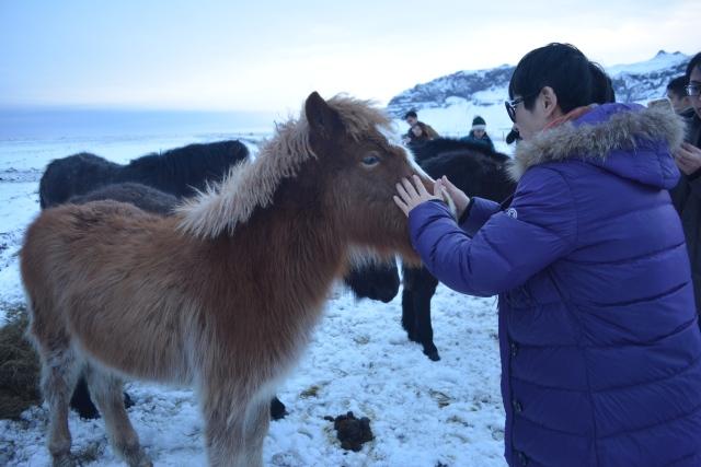 CoverMore_Lisa_Owen_Iceland_Horses.JPG