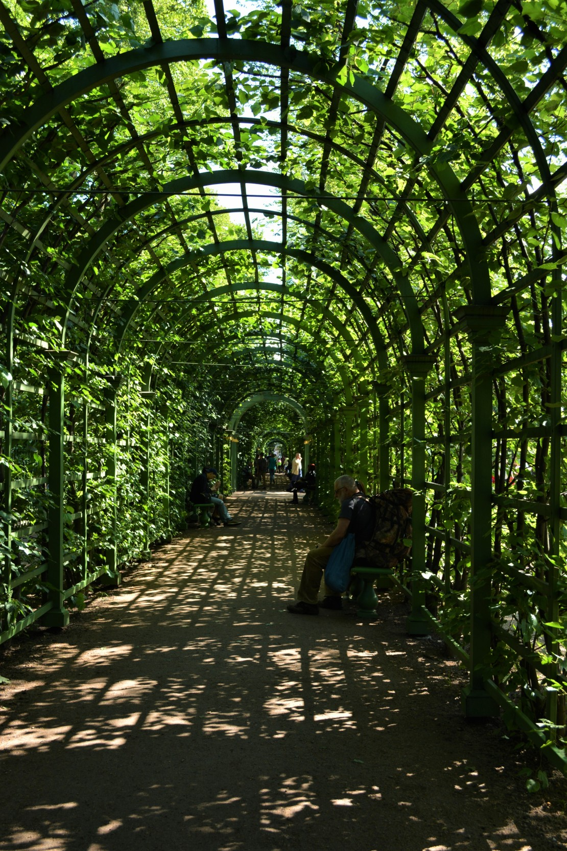 CoverMore_Lisa_Owen_Russia_StPetersburg_Garden.JPG