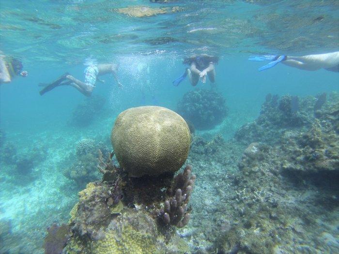 CoverMore_Lisa_Owen_Honduras_Snorkelling_Coral.jpg