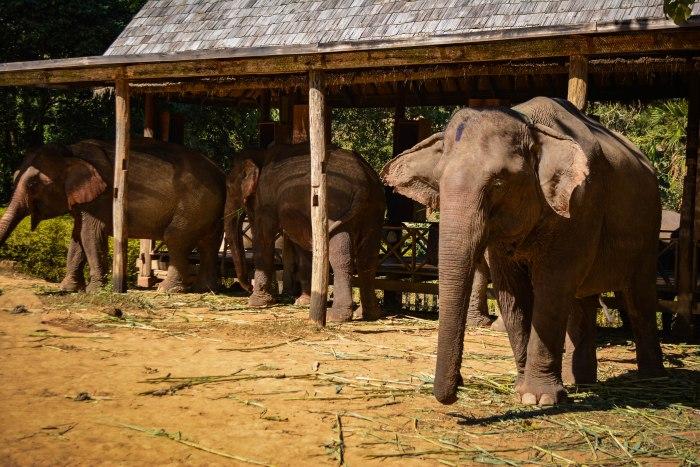 CoverMore_Lisa_Owen_Laos_LP_Elephants