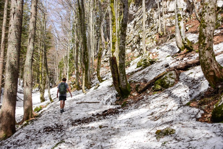 CoverMore_Lisa_Owen_Slovenia_Snow Woods
