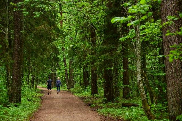 CoverMore_Lisa_Owen_Baltics_Latvia_Sigulda Woods