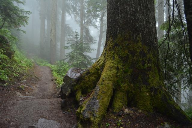 CoverMore_Lisa_Owen_USA_Washington_Cascades_Tree