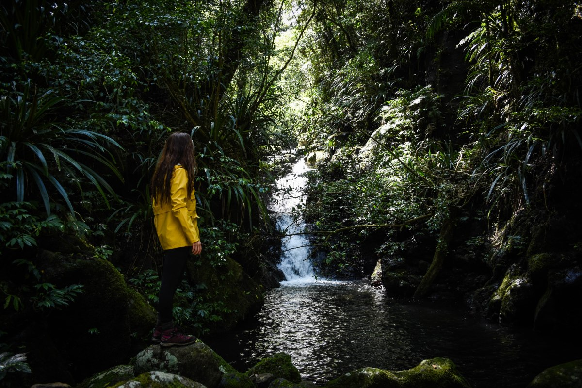 The best hikes in Lamington National Park